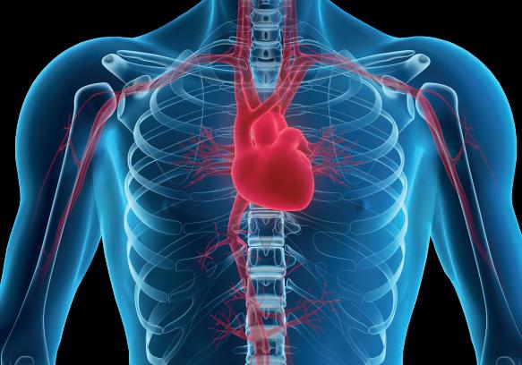 En las enfermedades cardiacas la prevención es la clave.